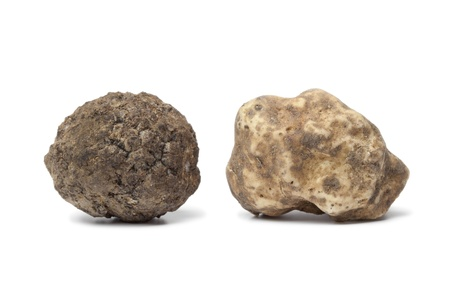 Black and white truffle on white background photo