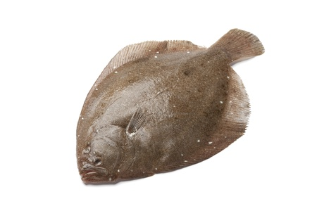 Whole single  Brill fish on white background Stock Photo - 11865397