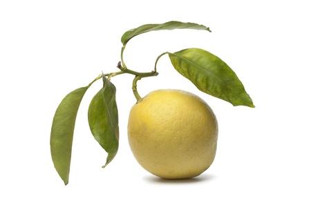 etrog: Whole single Citrus Medica fruit on white background Stock Photo