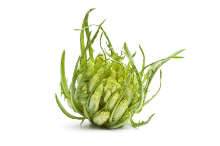 chicory: Fresh Puntarelle vegetable on white background