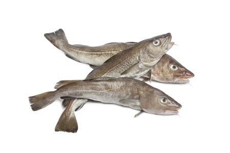 cod:  Fresh atlantic cod fishes on white background Stock Photo