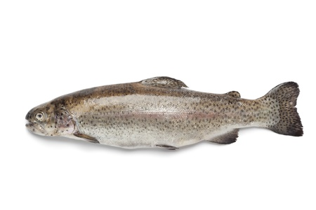 Whole single fresh Salmon trout on white background Stock Photo - 12793626