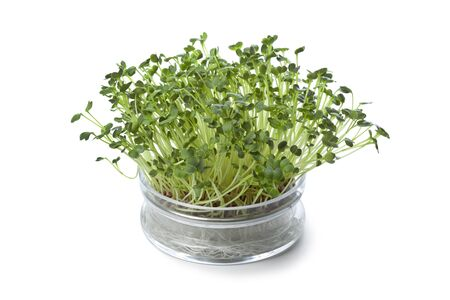 sprouting:  Glass bowl with fresh radish sprouts on white background