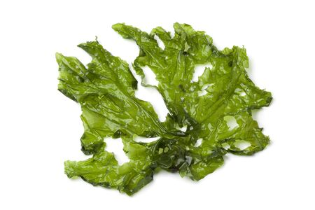 Leaf of Sea lettuce on white background