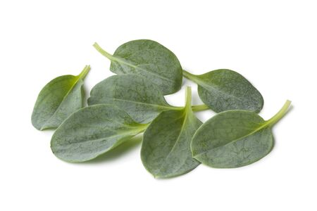 oyster plant:  Fresh oysterleaves on white background Stock Photo