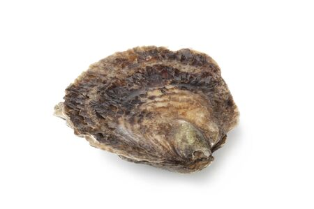 Single closed fresh European flat oyster on white background photo