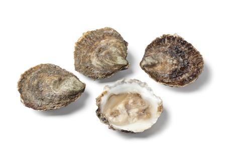 edulis: Openand closed European flat oystesr on white background Stock Photo