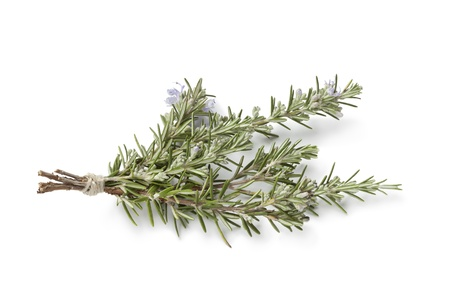 rosemary:  Bouquet of fresh blooming rosemary on white background