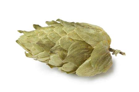 hop hops:  Common Hop flower on white background