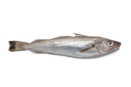 seafish:  Single fresh whiting on white background