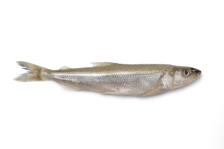 smelt:  Single fresh European smelt fish on white background