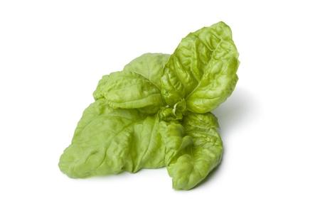 Lettuce leaf basil on white background Stock Photo - 14040971