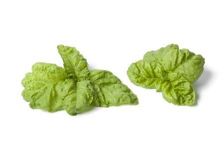 Lettuce leaf basil on white background Stock Photo - 14040851