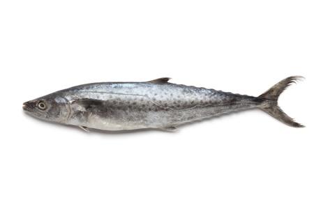Whole single Kingfish on white background