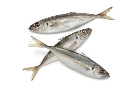 Atlantic horse mackerels on white background