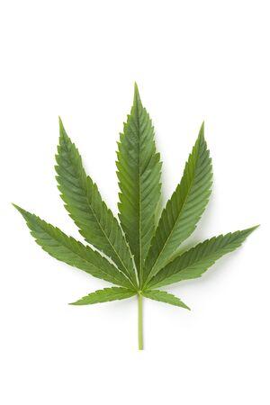 Single Marijuana leaf on white background