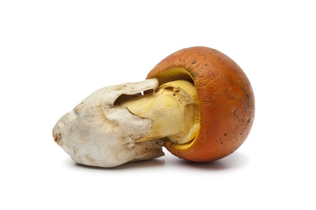Single Caesar's Mushrooms on white background photo