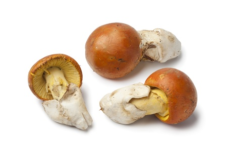 Caesar's Mushrooms on white background photo
