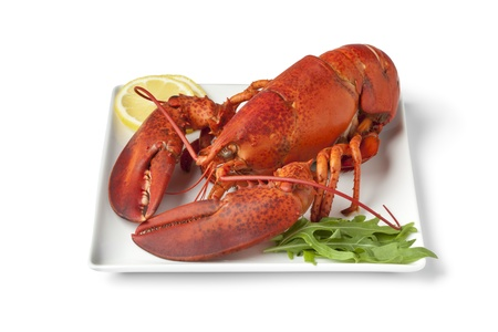 Fresh cooked lobster on a plate with lemon butter sauce on white background