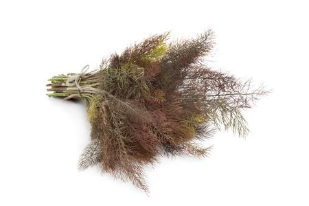 foeniculum vulgare: Bronze fennel on white background Stock Photo