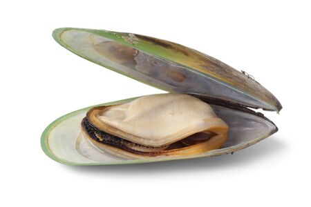 Fresh cooked Green lipped mussel from New Zealand Banque d'images