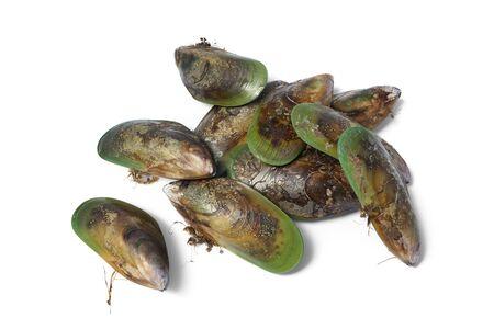 mejillones: Fresh cerrados mejillones de labio verde de Nueva Zelanda