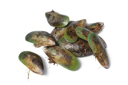 Fresh closed Green lipped mussels from New Zealand