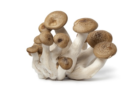 Fresh cluster of Nameko mushrooms on white background