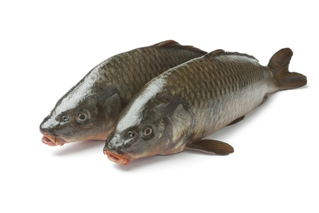 cyprinidae: Two whole carp fishes at white background