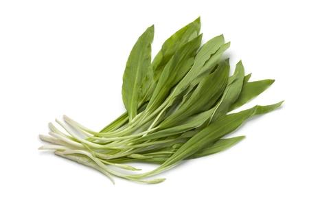 Fresh Ramson leaves on white background