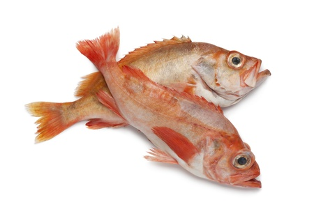 redfish:  Pair of redfishes on white background