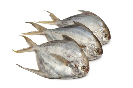 Pomfret fishes on white background photo