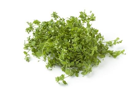 chickweed: Fresh organic chickweed on white background Stock Photo