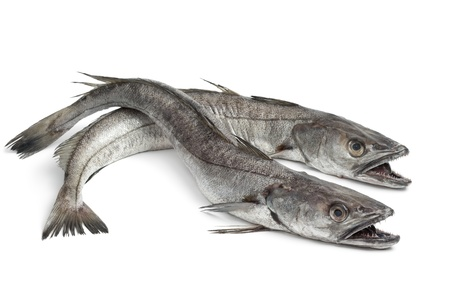 Two Hake fishes on white background