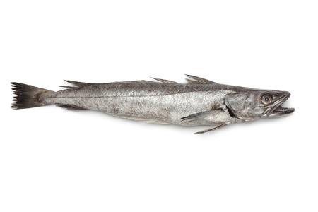 Enkele verse Heek vis op een witte achtergrond