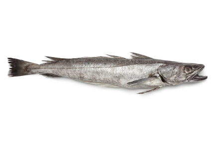 hake:  Single fresh Hake fish on white background Stock Photo