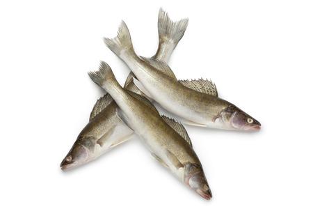 zander: Fresh Zander fishes on white background