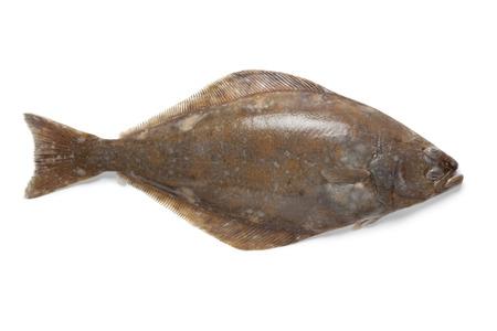 halibut:  Fresh halibut fish on white background Stock Photo