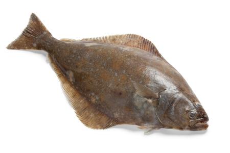 Verse heilbot vis op een witte achtergrond Stockfoto