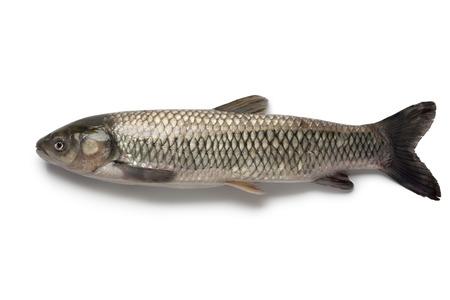 Whole single grass carp on white background