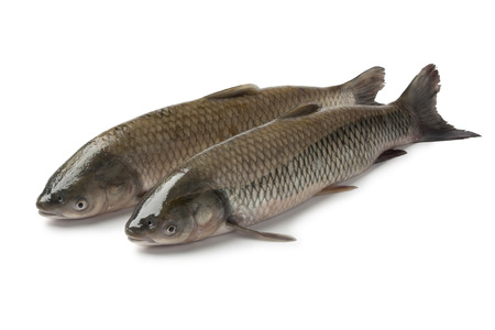 Pair of grass carps on white background Stock Photo