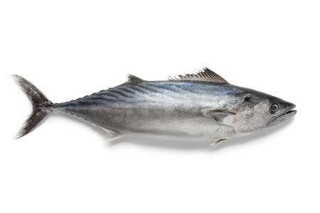 Singlre fresh bonito fish at white background Stok Fotoğraf