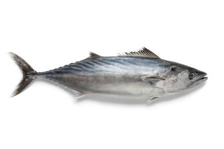 Singlre fresh bonito fish at white background Banque d'images