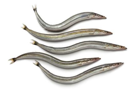 Lesser sand eels on white