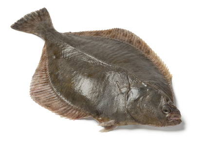 Whole single fresh  European flounder on white
