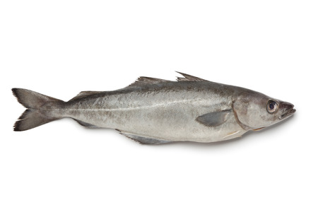 Fresh atlantic pollock fish on white background