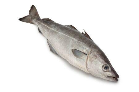 Fresh coalfish fish on white background Standard-Bild
