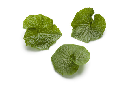 Wasabi leaves on white background