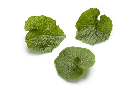 Wasabi leaves on white background