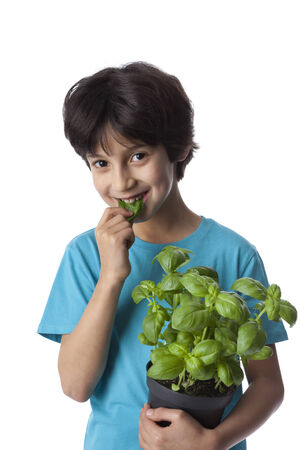 Eight year old boy eats basil leaves on white background